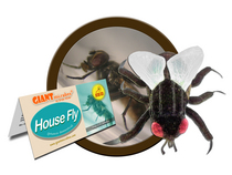 House Fly Giant Microbe