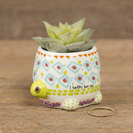 Natural Life Critter Succulent Turtle