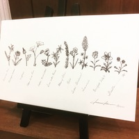 Texas Wildflowers Print