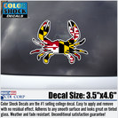 University of Maryland Color Shock Mascot Decal